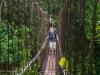 Bridge on the trail
