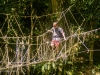 Owen crossing a rope bridge