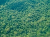 Rainforest Canopy from the air