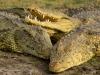 Heap 'o Crocs!