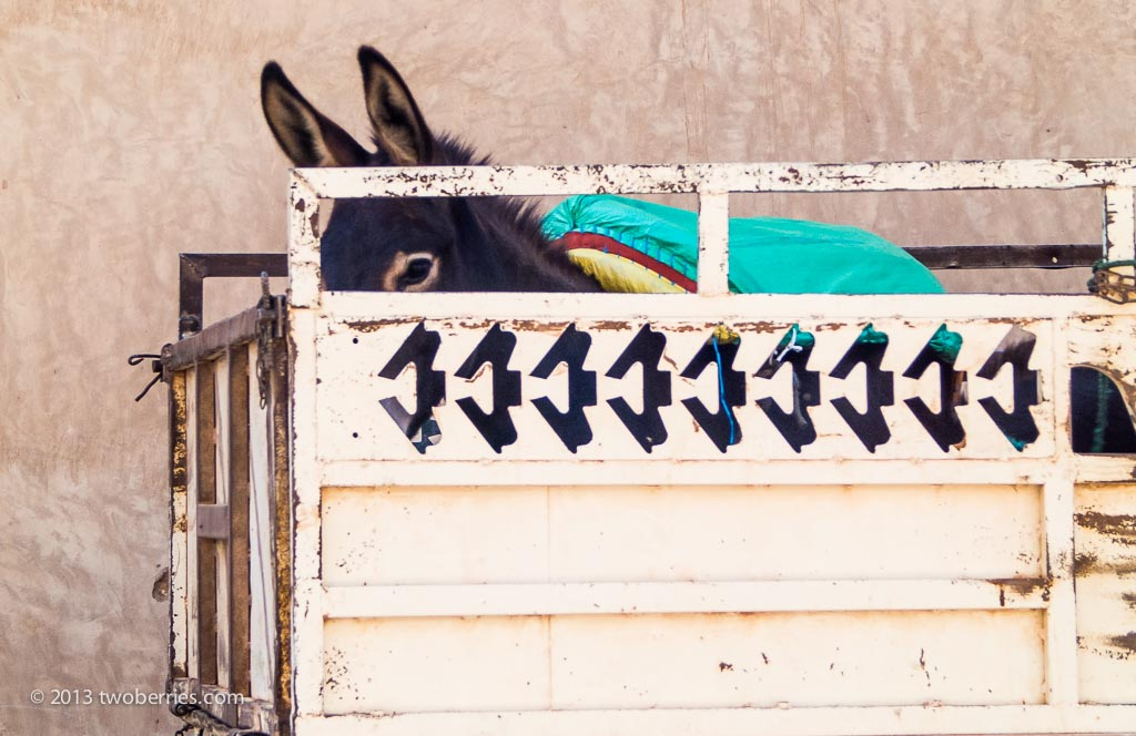 Donkey in a pick-up
