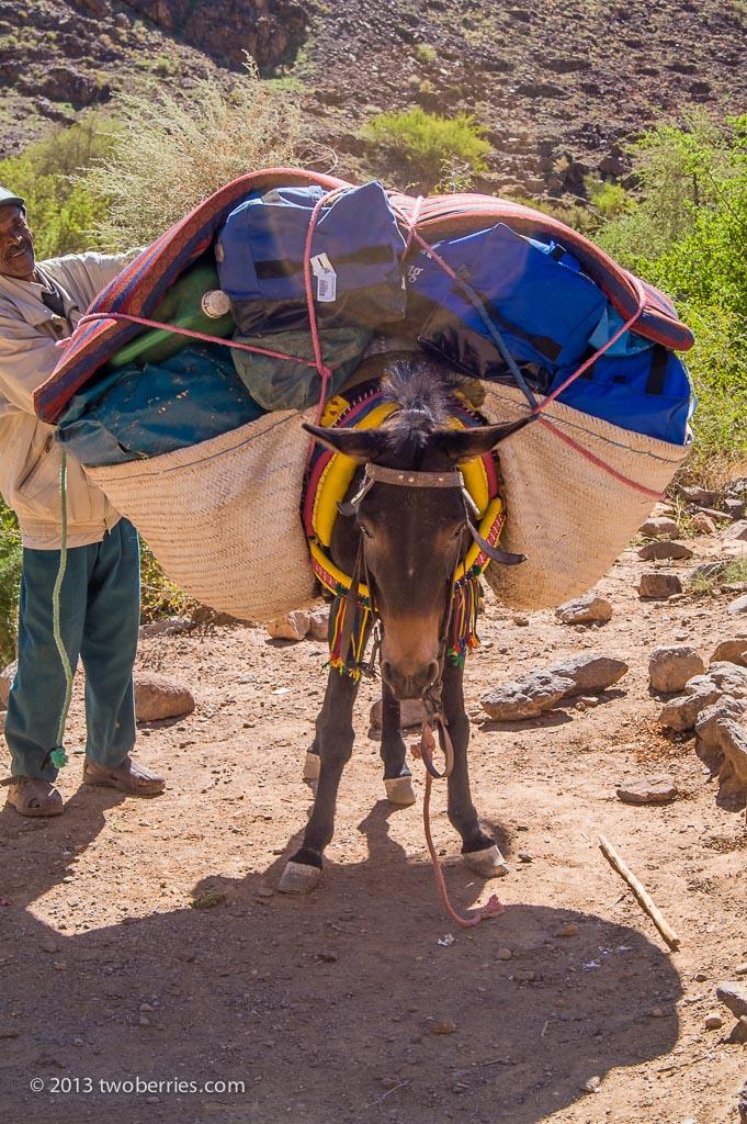 Fully loaded mule