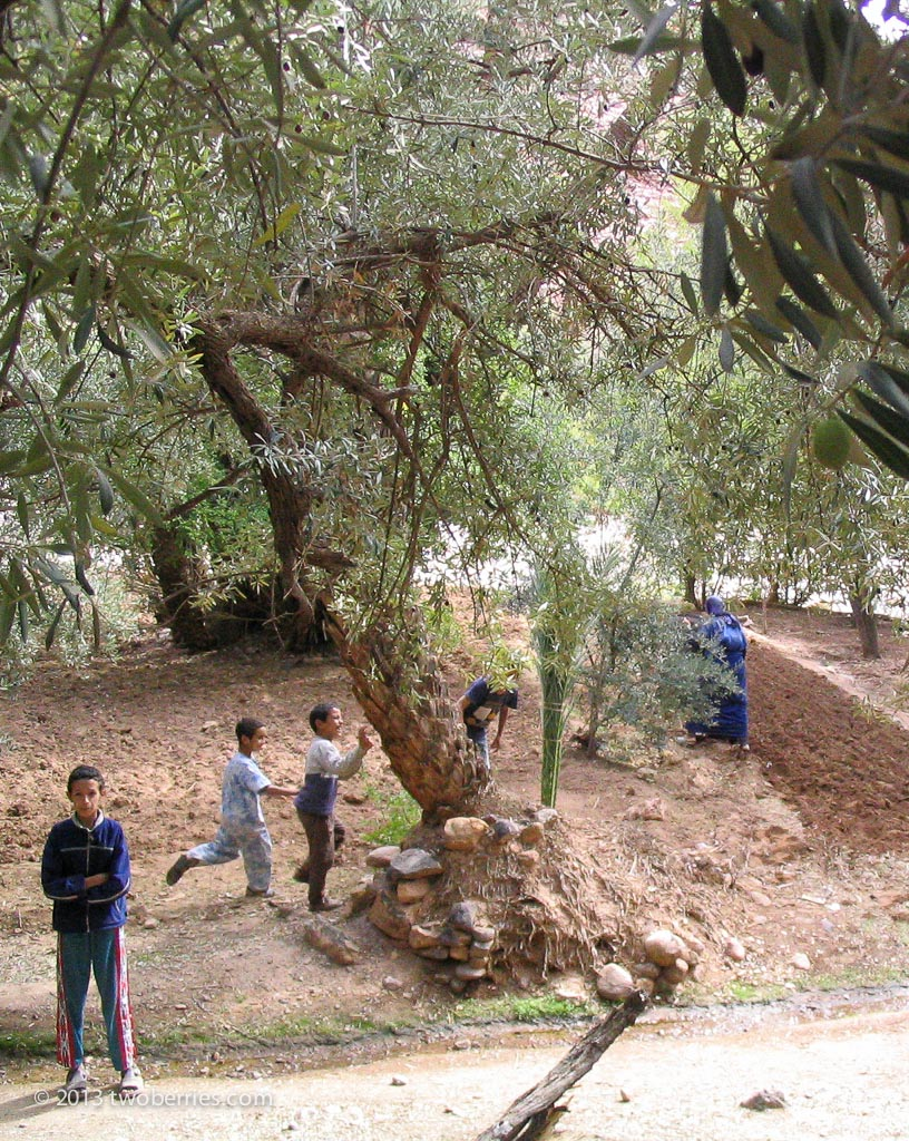 Berber village children
