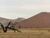 Desert dunes in the Namib