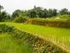 Rice paddy, Northern Vietnam